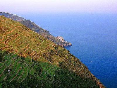 Terrazzamenti delle Cinque Terre